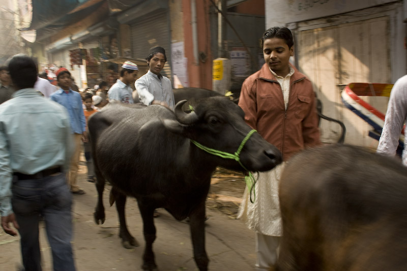 Eid festivities in Old Delhi. Festejo musulmana del Eid en Delhi Viejo.